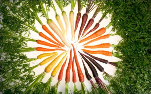 Spiral of coloful carrots raning from orange to purpole