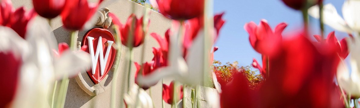 Flowering red and white tulips frame an ornate W crest icon